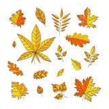 Комплект красочных листьев осени на белой предпосылке Листья осени для приглашений, поздравительных открыток, знамен, сертификата бесплатная иллюстрация