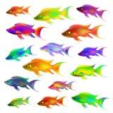 Комплект красочных рыб Стоковое Изображение
