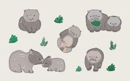 Комплект милого молодого wombat в различных представлениях Взрослое животное с новичком Нарисованная рукой красочная иллюстрация  Стоковое Изображение