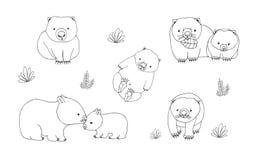Комплект милого молодого wombat в различных представлениях Взрослое животное с новичком Нарисованная рукой иллюстрация вектора ко Стоковые Фото
