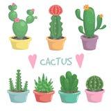 Комплект милого экзотического кактуса комнатного растения Стоковые Изображения RF