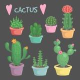 Комплект милого экзотического кактуса комнатного растения Стоковое фото RF