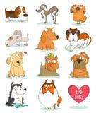 Комплект милых характеров собаки изолированных на белизне Стоковые Изображения