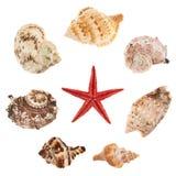 Комплект множественных изолированных раковин моря Стоковое Изображение RF