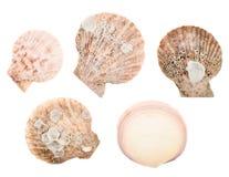 Комплект множественных изолированных раковин моря Стоковая Фотография RF