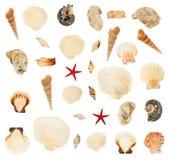 Комплект множественных изолированных seashells Стоковое Изображение RF
