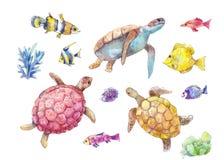 Комплект морских черепах, морских рыб и акварели водорослей Стоковое Фото