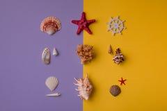 Комплект морского пехотинца seashells Стоковые Изображения