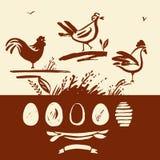 Комплект нарисованного вручную петуха щетки, цыпленка, яичек Стоковая Фотография