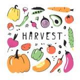 Комплект нарисованный рукой овоща Еда чертежа вектора художническая Лук иллюстрации лета красный, тыква, редиска, картошка Стоковая Фотография RF