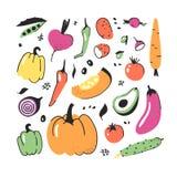 Комплект нарисованный рукой овоща Еда чертежа вектора художническая Лук иллюстрации лета красный, тыква, редиска, картошка Стоковое фото RF
