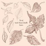 Комплект нарисованных вручную листьев леса осени doodle Стоковая Фотография