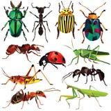 Комплект насекомого Стоковые Изображения