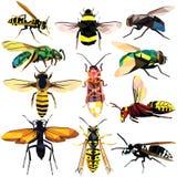Комплект насекомого Стоковые Фото