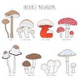 Комплект несъедобных грибов с названиями на белой предпосылке Нарисованное рукой собрание иллюстрации вектора красочное Стоковая Фотография RF