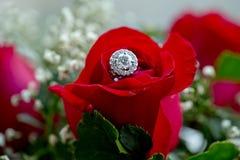 Комплект обручальных колец в крупном плане принятом красной розой Стоковое фото RF