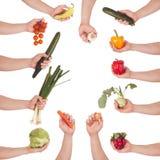 Комплект овоща руки стоковое изображение rf