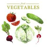 Комплект овощей акварели свежих на белой предпосылке Стоковые Фото
