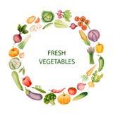 Комплект овощей акварели Стоковые Фото
