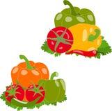 Комплект овощей, иллюстрация, Стоковые Фото