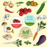 Комплект овощей и ярлыков бесплатная иллюстрация
