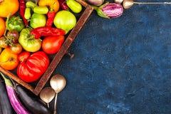 Комплект овощей осени Стоковые Изображения RF