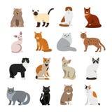 Комплект домашнего животного пород кота милый Стоковая Фотография RF
