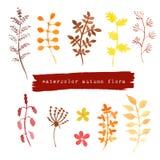 Комплект осени акварели флористический Стоковые Изображения
