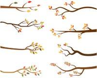Комплект осени силуэтов ветви дерева Иллюстрация штока