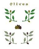 Комплект оливковых веток Стоковые Фотографии RF