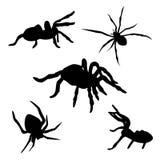 Комплект паука Стоковое Изображение RF