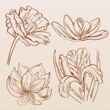 Комплект покрашенных рукой цветков эскиза Бесплатная Иллюстрация