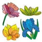 Комплект покрашенных рукой цветков эскиза Иллюстрация вектора
