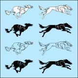 Комплект породы saluki идущей собаки силуэтов Стоковые Изображения
