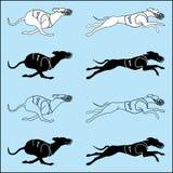 Комплект породы whippet идущей собаки силуэтов Стоковые Изображения