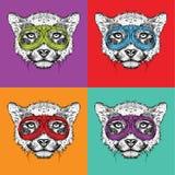 Комплект портретов гепарда в стеклах мотоцикла Иллюстрация вектора стиля искусства шипучки Стоковые Фотографии RF