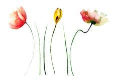 Комплект полевых цветков Стоковые Фотографии RF
