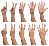 Комплект подсчитывать руки изолированные на белизне стоковое фото rf