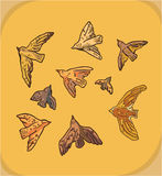 Комплект 9 птиц Стоковые Изображения