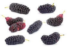 Комплект плодоовощ черной шелковицы Стоковая Фотография