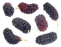 Комплект плодоовощ черной шелковицы Стоковое Фото