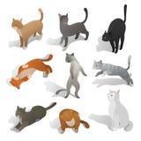 Комплект равновеликих котов шаржа в различных представлениях Стоковая Фотография