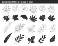 Комплект разных видов нарисованных рукой листьев Стоковое Изображение RF