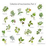 Комплект различных ветвей дерева иллюстрация вектора
