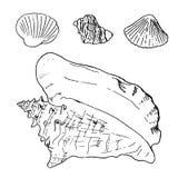 Комплект различных красивых раковин моря наяды, иллюстрация эскиза бесплатная иллюстрация