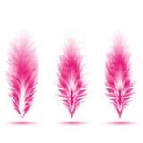 Комплект различных пер птиц Пер как щетки Уникально щетки иллюстрация вектора