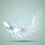 Комплект различных пер птиц Пер как щетки Уникально щетки Стоковые Изображения RF