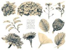 Комплект различных цветков и заводов весны Стоковые Изображения