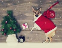 Комплект рождества, собака Стоковое Фото