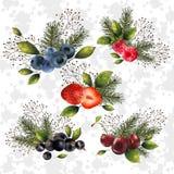 Комплект рождества ягод Стоковое фото RF